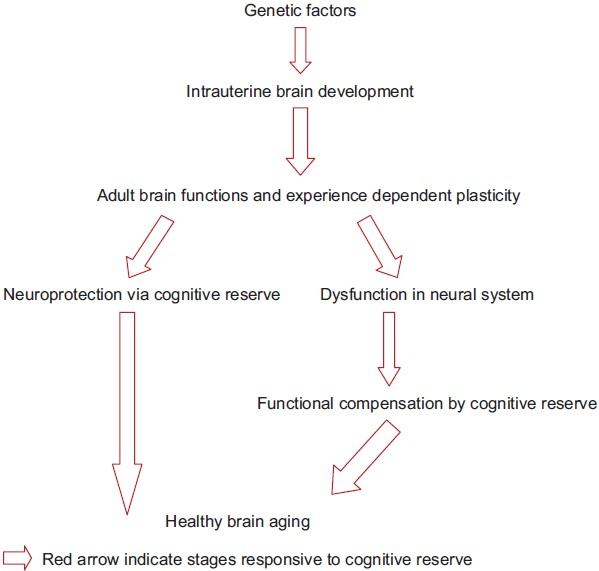 Figure 2: Factors affecting cognitive reserve at various stages of human development